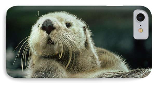 Sea Otter  IPhone Case by Tim Fitzharris