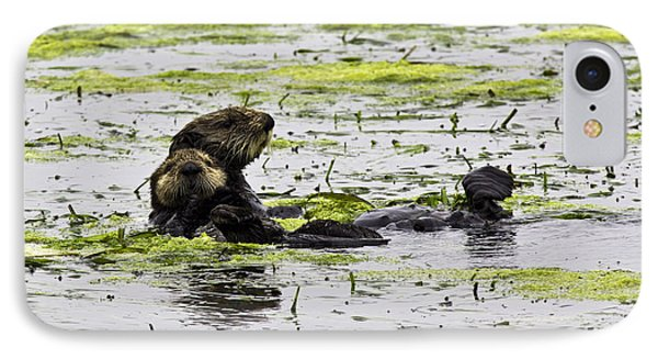 Sea Otters 1 IPhone Case