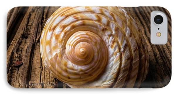 Sea Shell Study In Brown Tones IPhone Case
