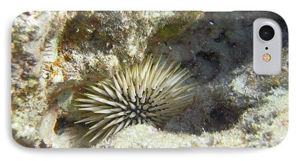 Sea Urchin IPhone Case by Michael Peychich
