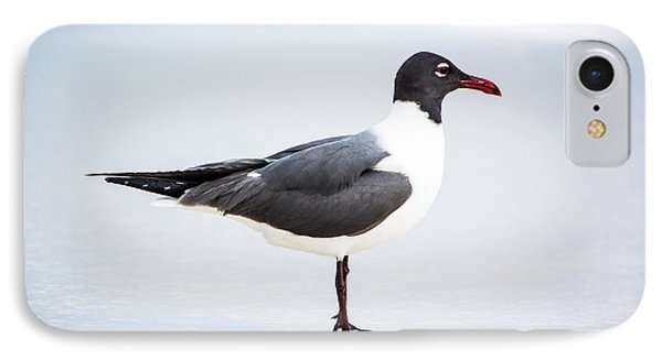 Seagull At The Beach IPhone Case by Shelby Young