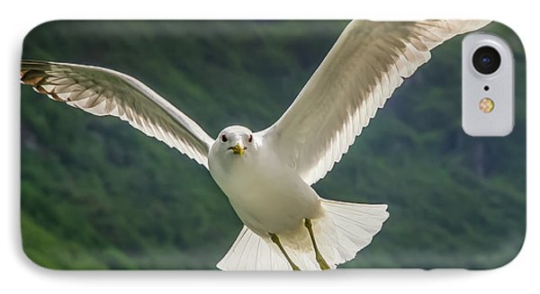Seagull At The Fjord IPhone Case by KG Thienemann