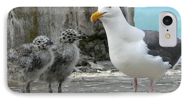 Seagull Family IPhone Case by Laurel Powell