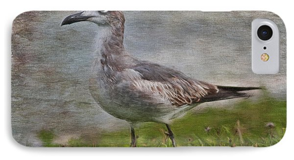 Seagull Friend IPhone Case by Deborah Benoit