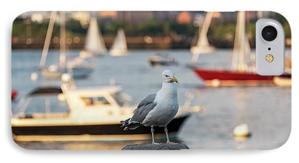 Seagull Guarding The Boston Harbor Boston Ma IPhone Case by Toby McGuire