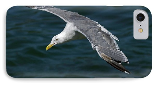 Seagull  In Flight Phone Case by Randall Ingalls