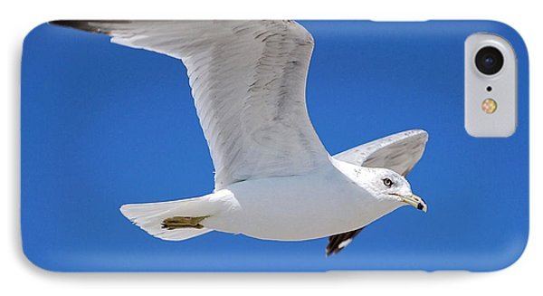 Seagull IPhone Case by Ludwig Keck