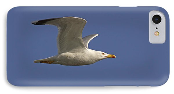 Seagull IPhone Case by Marco Amenta