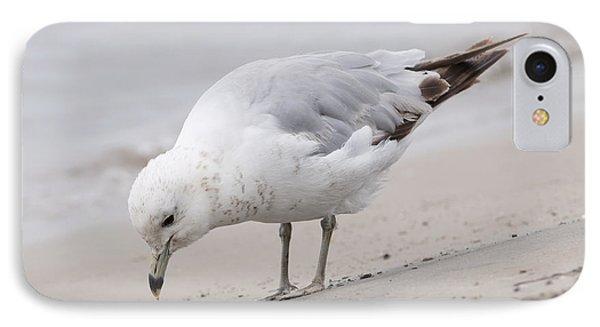 Seagull On Foggy Beach IPhone Case
