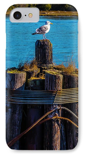 Seagull On Pilings  IPhone Case