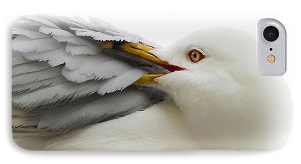 Seagull Pruning His Feathers IPhone Case