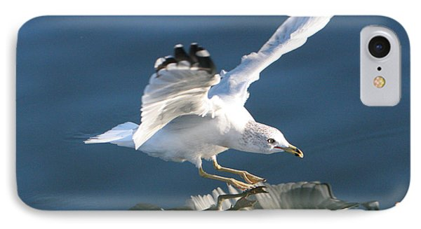 Seagull Reflection IPhone Case