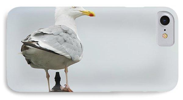 Seagull Phone Case by Svetlana Sewell