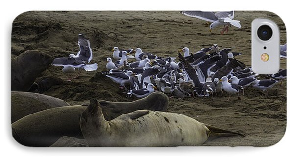 Seagulls And Elephant Seals IPhone Case