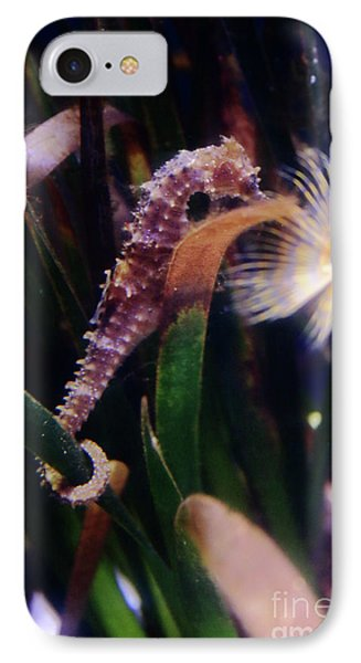 Seahorse IPhone Case by Ana Mireles