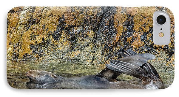 Seal On His Back IPhone Case by Patricia Hofmeester