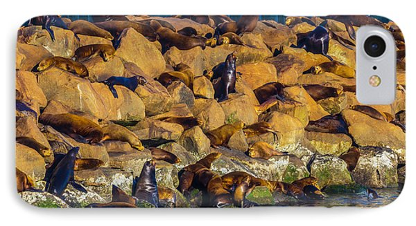 Seals On Jetty Rocks IPhone Case by Garry Gay