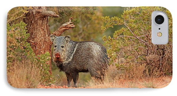 Sedona Javelina IPhone Case