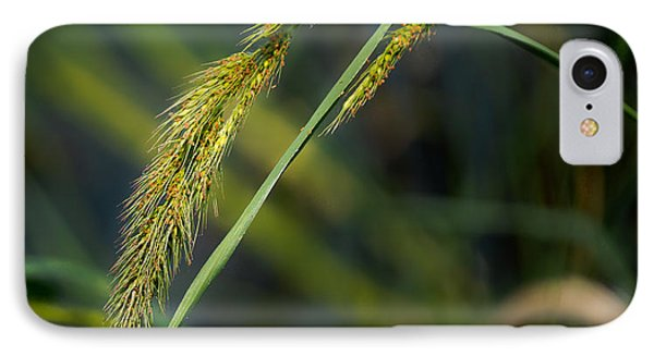 Seeds IPhone Case by Allen Biedrzycki