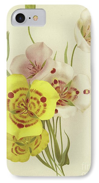 Sego Lily   Calochortus IPhone Case by English School