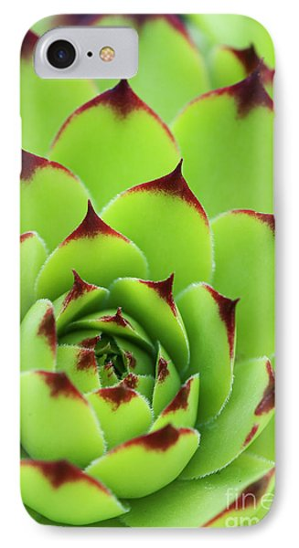 Sempervivum Tectorum Royanum IPhone Case by Tim Gainey