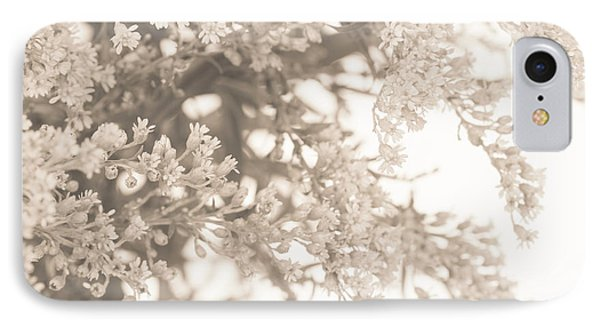 Sepia Solidago 3 IPhone Case by Anne Gilbert