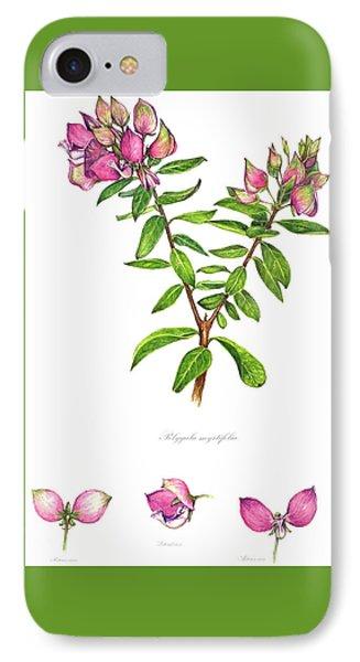 IPhone Case featuring the painting Septemberbossie  Polygala Myrtifolia by Heidi Kriel