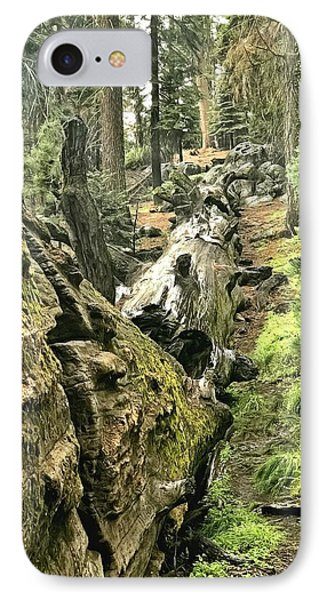 Sequoia Fallen Tree IPhone Case