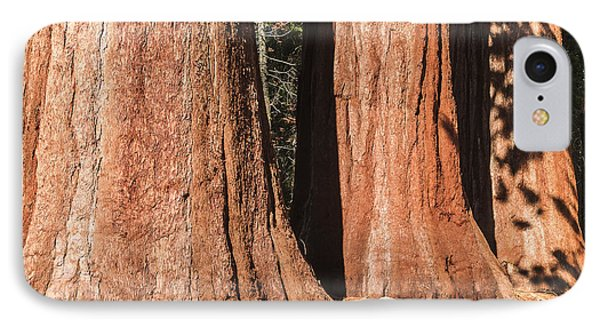 Sequoia IPhone Case by Muhie Kanawati