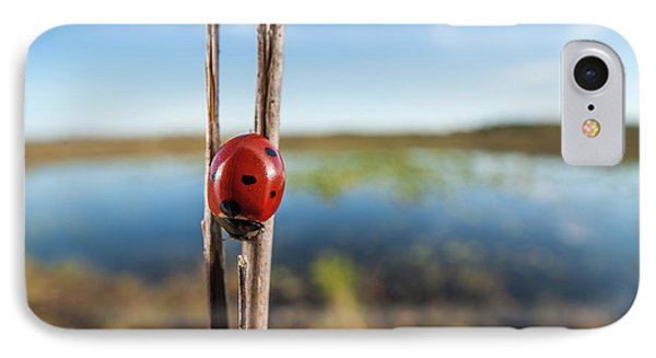Seven-spotted Lady Beetle IIi IPhone Case