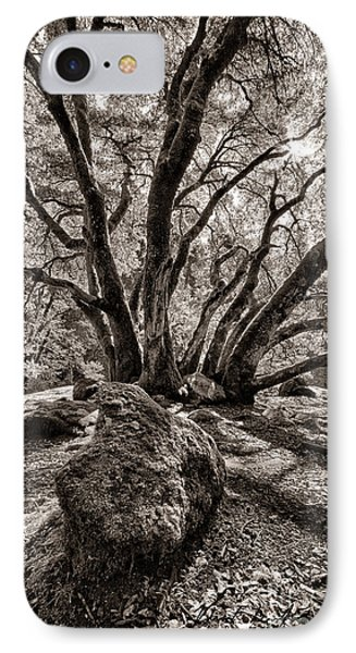 Shadow Tree IPhone Case