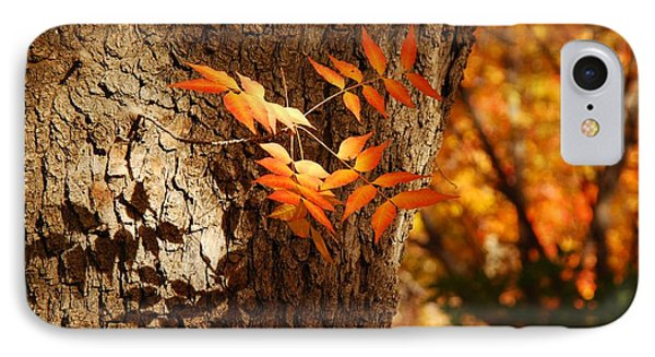 Fall Color IPhone Case by Tam Ryan