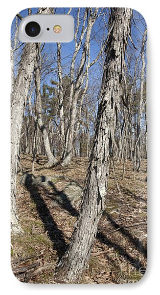 Shagbark Hickory Forest  Phone Case by Erin Paul Donovan