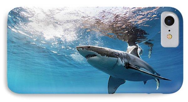 Shark Rays IPhone Case by Shane Linke