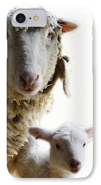 Sheep Portrait IPhone Case
