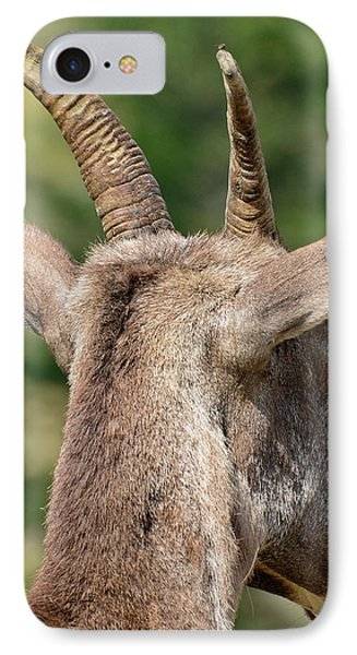 IPhone Case featuring the photograph Sheepish Look by Bruce Gourley