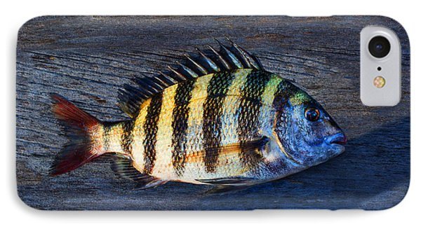 IPhone Case featuring the photograph Sheepshead Fish by Laura Fasulo