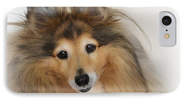Sheltie Dog - A Sweet-natured Smart Pet IPhone Case by Christine Till