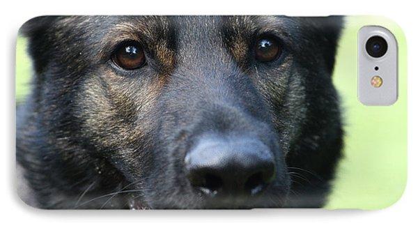 Shepherd Closeup IPhone Case by Karol Livote