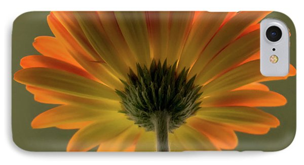 Shine Bright Gerber Daisy Square IPhone Case by Terry DeLuco
