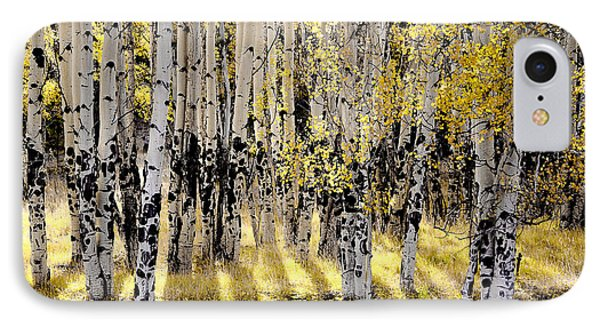 Shining Aspen Forest IPhone Case by The Forests Edge Photography - Diane Sandoval