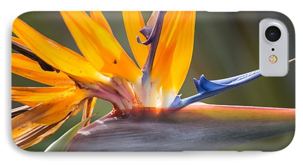 IPhone Case featuring the photograph Shocktop by Julie Andel