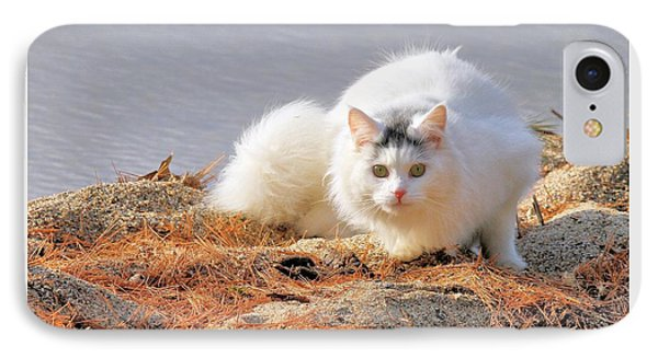 IPhone Case featuring the photograph Shore Kitty by Debbie Stahre