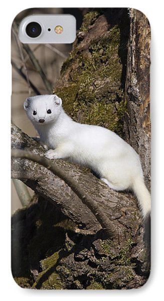 Short-tailed Weasel Mustela Erminea Phone Case by Konrad Wothe