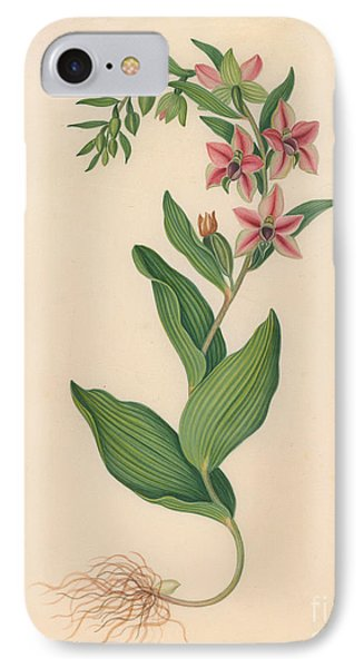 Showy Orchis IPhone Case