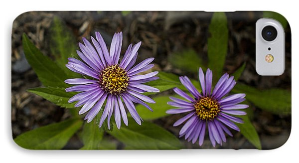 Siberian Aster IPhone Case