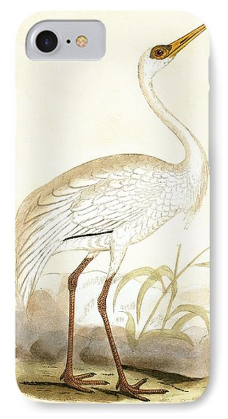 Siberian Crane IPhone Case by English School