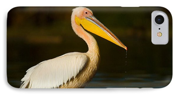 Side Profile Of A Great White Pelican IPhone Case by Panoramic Images