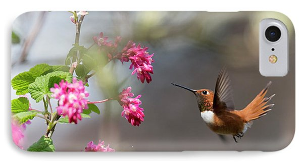 Sign Of Spring 3 IPhone Case by Randy Hall