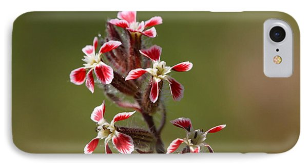 IPhone Case featuring the photograph Silene by Richard Patmore